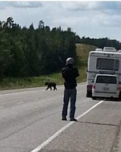 Adrian taking a photo of a bear on the road