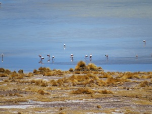 Pink flamingos in the desert